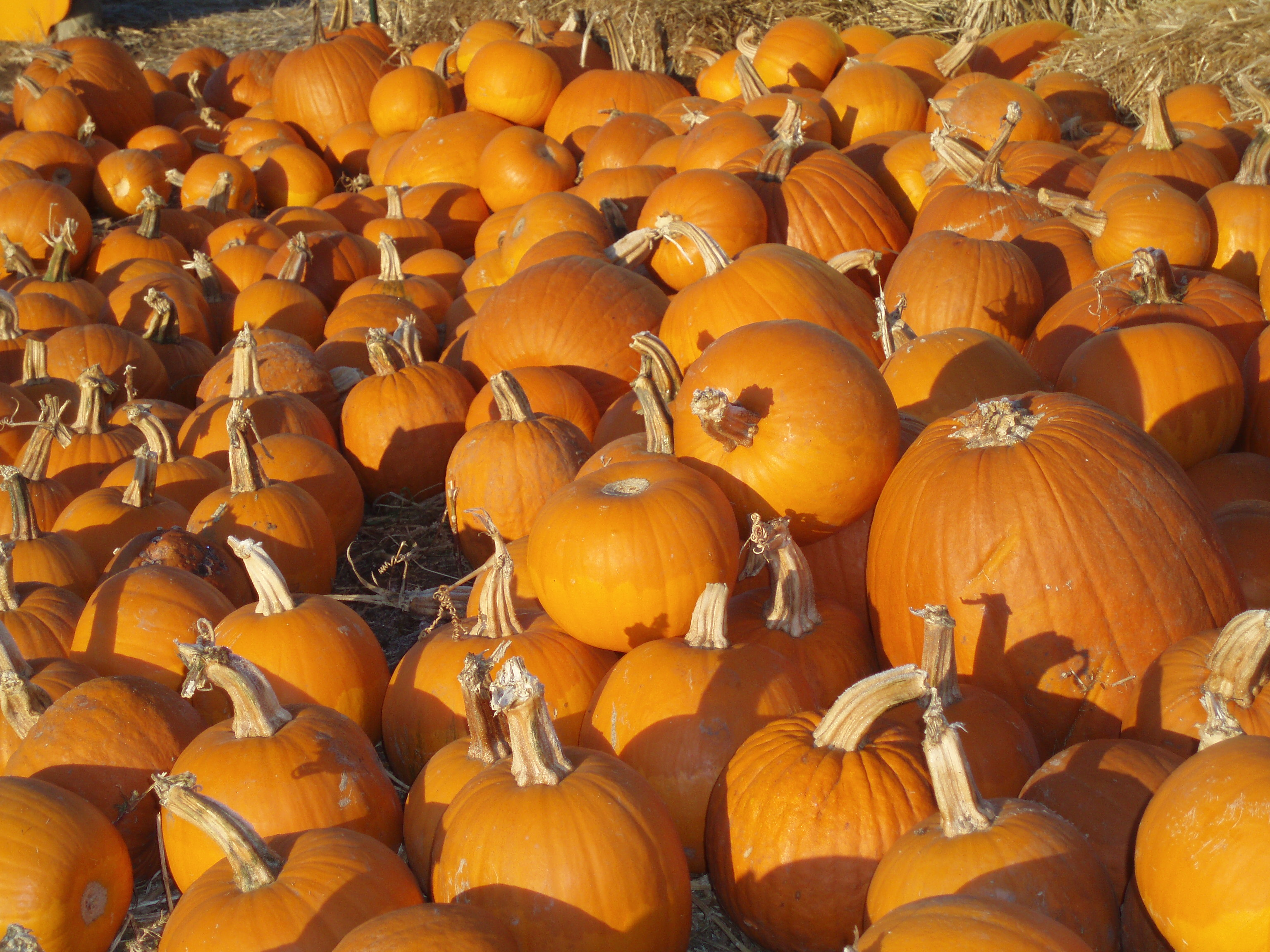 pumpkin patch Clancy's christmas trees is located 1620 7th ave in san francisco come see  the hundreds of beautiful trees that we have for christmas.