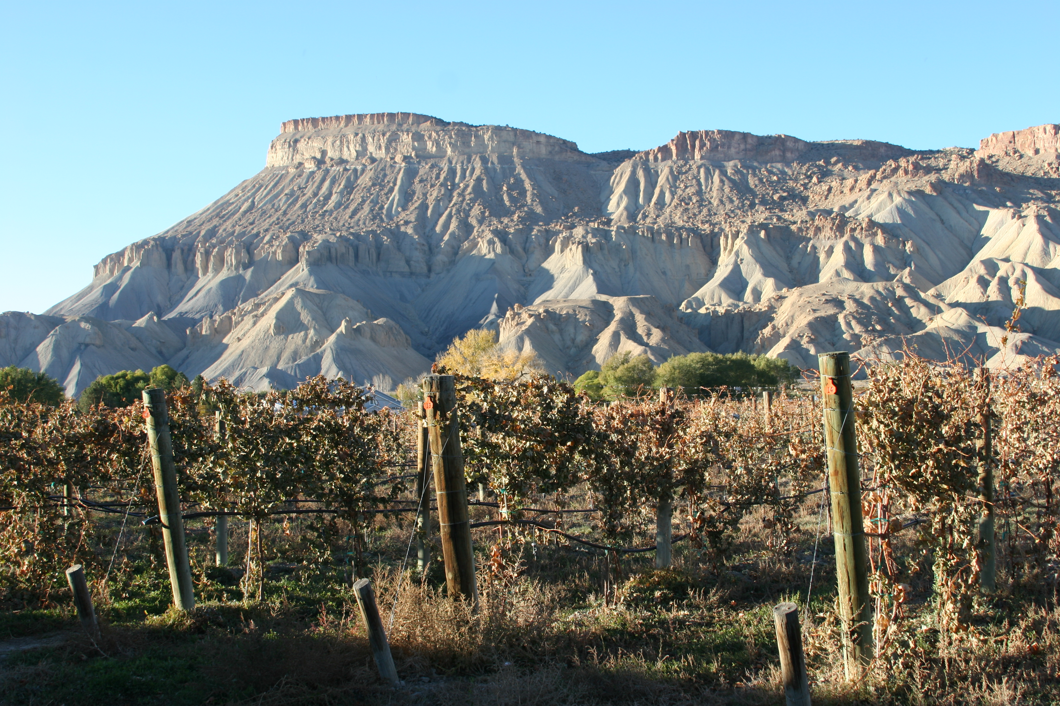 Discovering Palisade and Grand Junction – Majestic Beauty, Delicious Foods