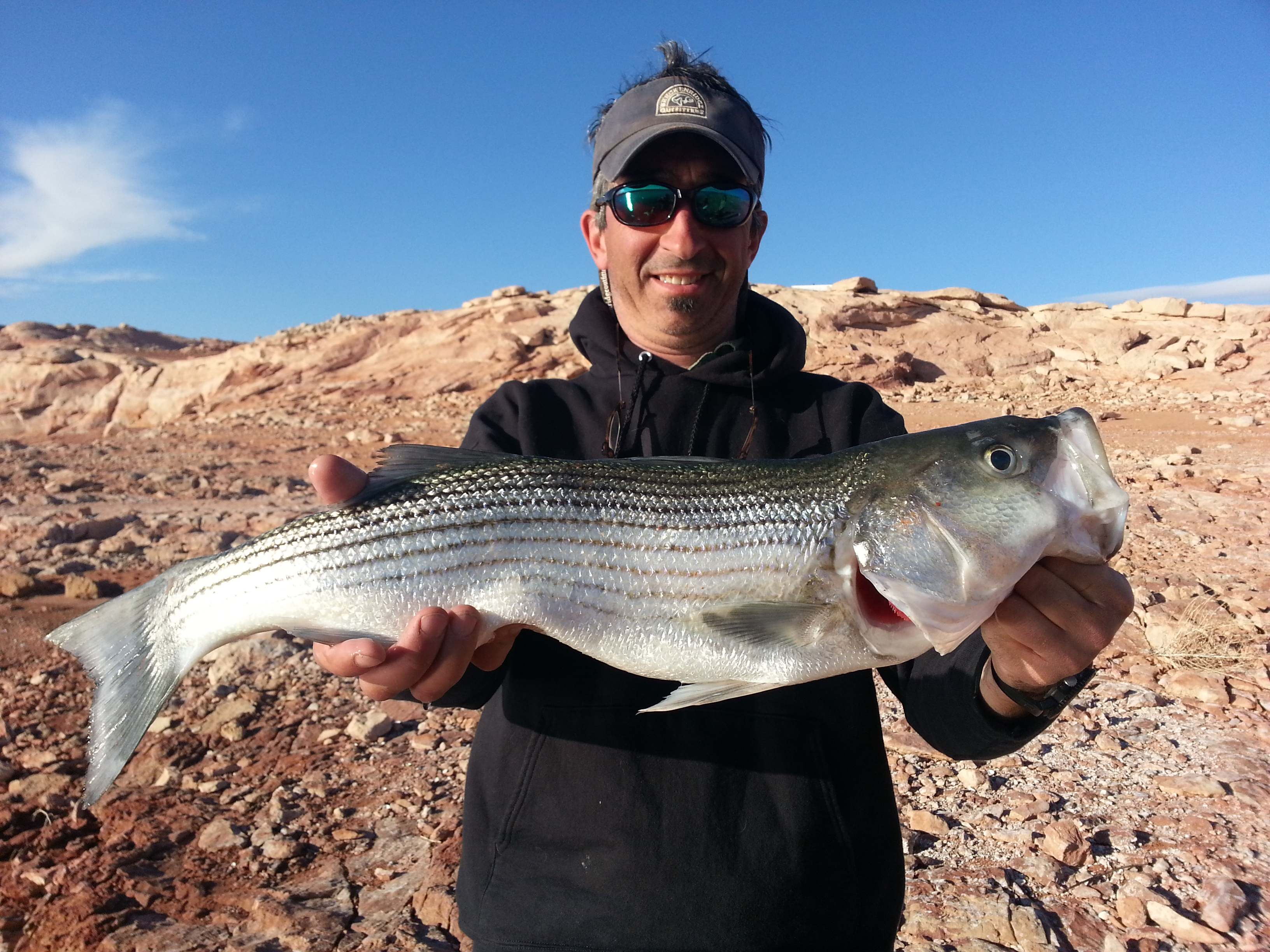 Striper Season Lake Powell