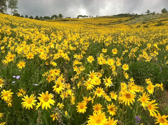cbmg wildflower 2