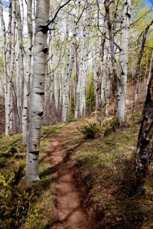 Eagle Trail 2