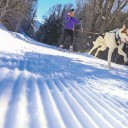 Learn to Skijor with your Dog