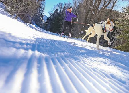 Silverthorne Dog Park