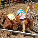 Colorado BBQ Challenge – Frisco