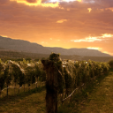 Colorado Red Wines – Holiday Suggestions: Sutcliffe Vineyards