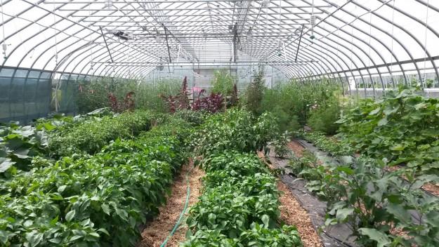 Elkstone Farms