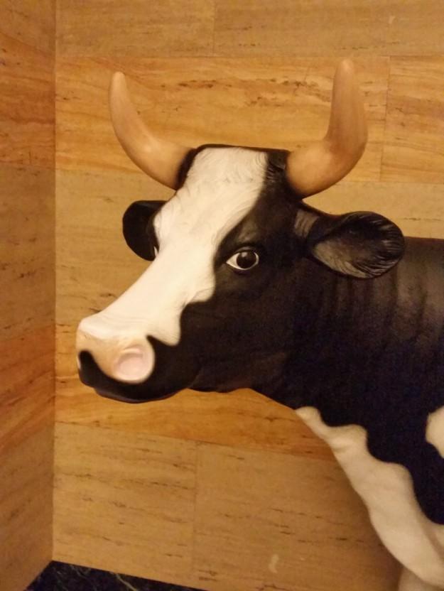 monaco cow