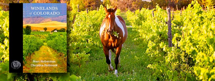 Winelands of Colorado Header