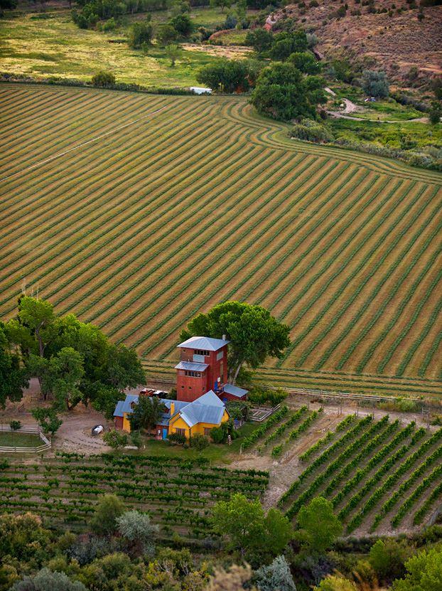 COCKTAILS – Winelands Sutcliff