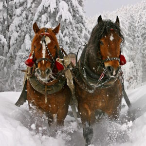 GOLDEN HORSESHOE SLEIGH TOUR & COOKOUTS